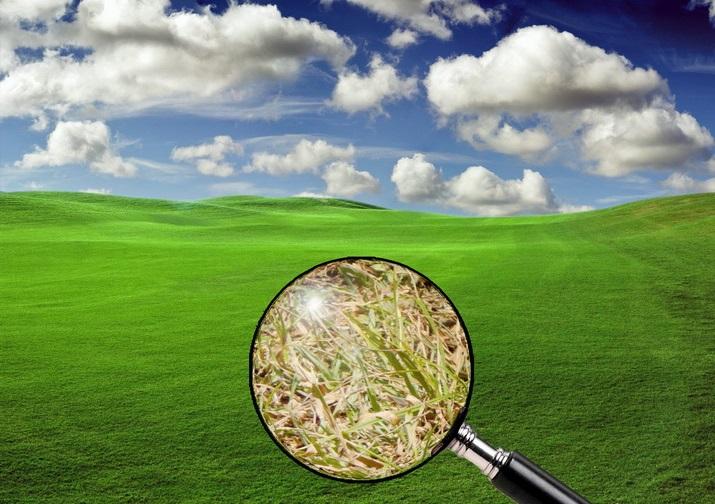 rumput tetangga selalu lebih hijau