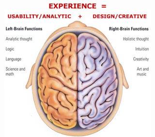 otak-manusia-dan-fungsinya