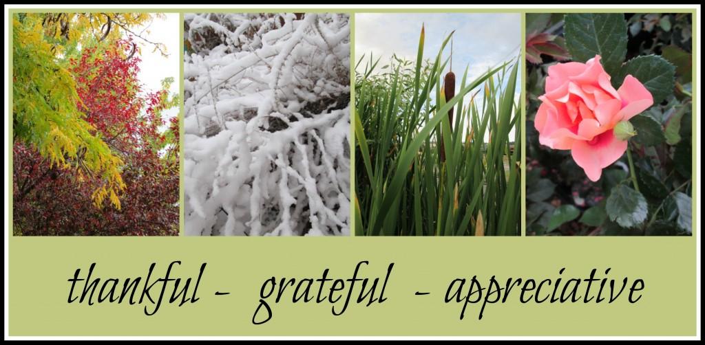 Picture : http://finchnwren.com/wp-content/uploads/2015/01/thankful-grateful-appreciative-e1421096089186.jpg